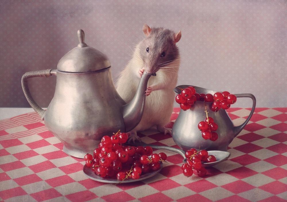 A piece of fine art art photography titled Snoozy  (again) by Ellen van Deelen