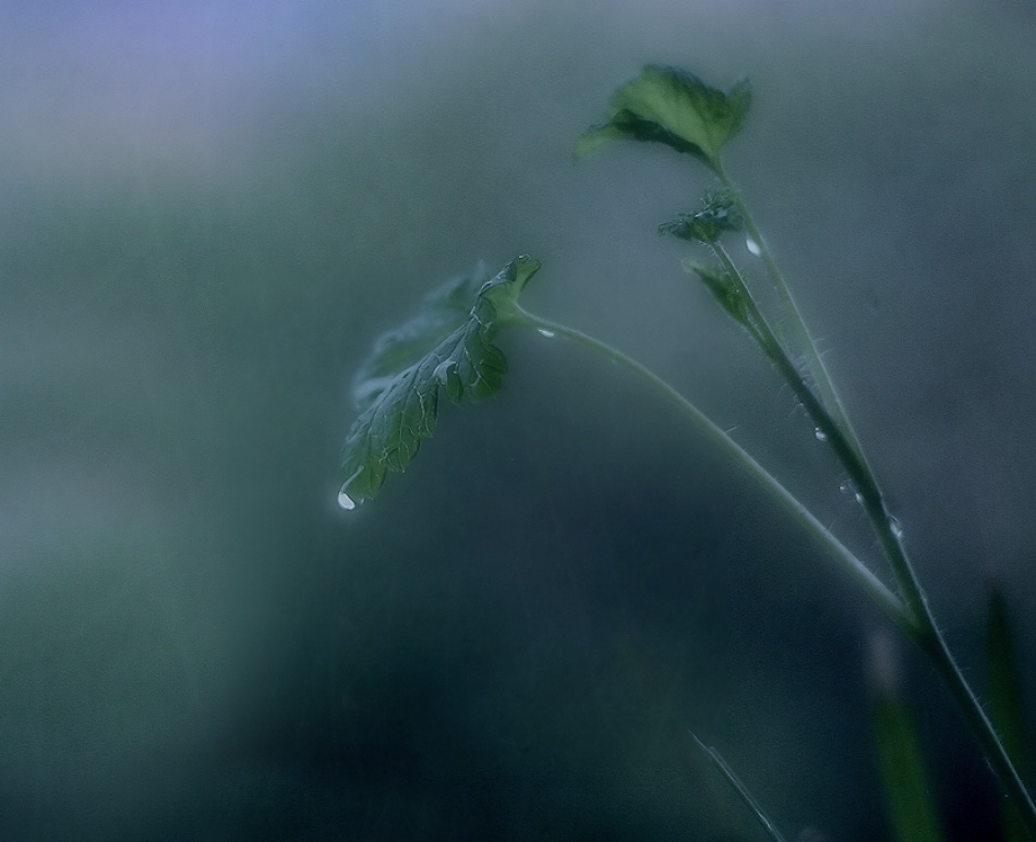 A piece of fine art art photography titled Today It Rains by kiti