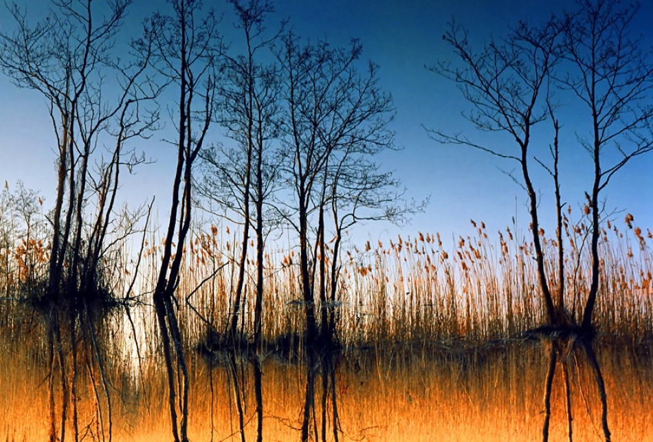 A piece of fine art art photography titled The Submerging Trees by Karlis Keisters