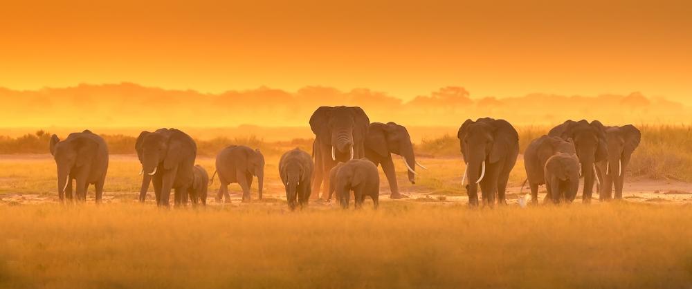 A piece of fine art art photography titled Golden Light by David Hua
