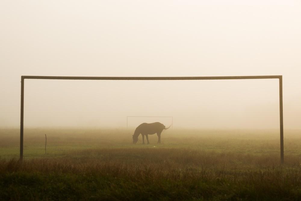 A piece of fine art art photography titled The Horse by Ovidiu Satmari