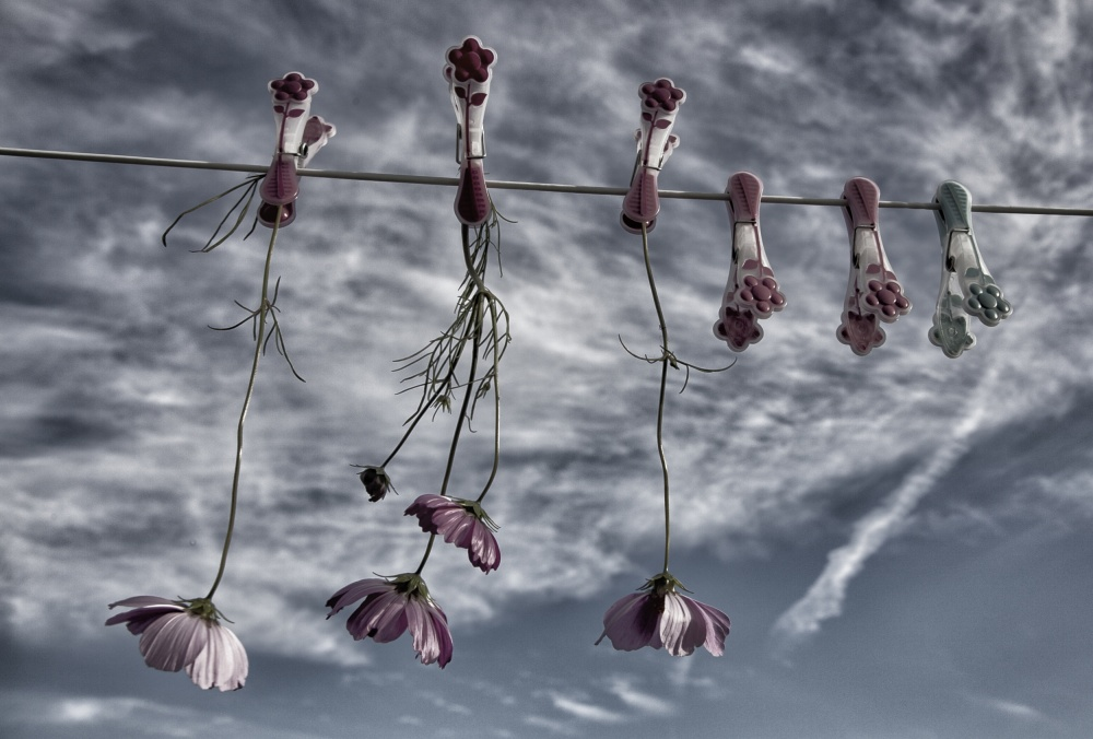A piece of fine art art photography titled Flowers Never Get Tired of a Blue Sky by Yvette Depaepe