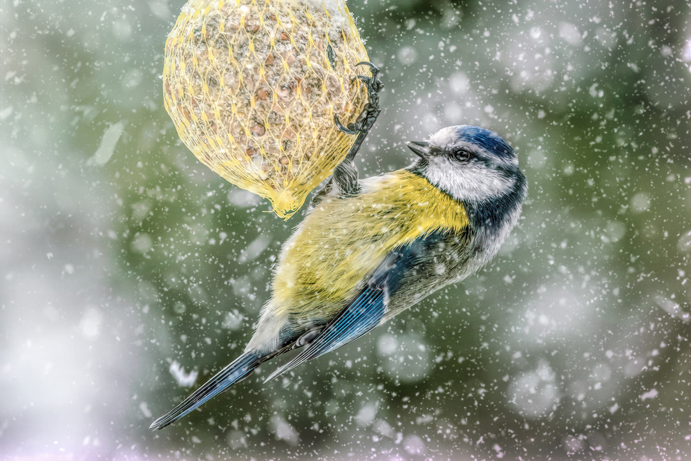 View this piece of fine art photography titled Surviving Winter by sara jazbar