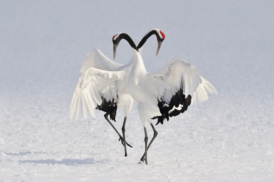 A piece of fine art art photography titled Winter Dance by Marsel van Oosten