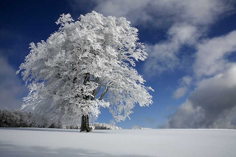 A piece of fine art art photography titled White Windbuche In Black Forest by Nicolas Schumacher