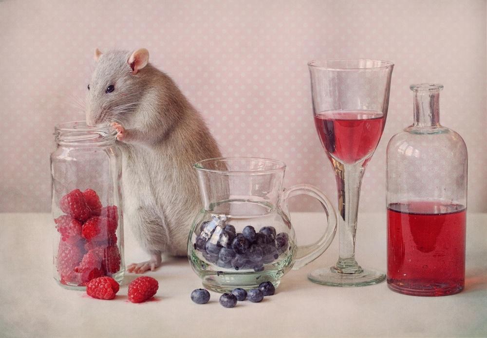 A piece of fine art art photography titled Jimmy by Ellen van Deelen