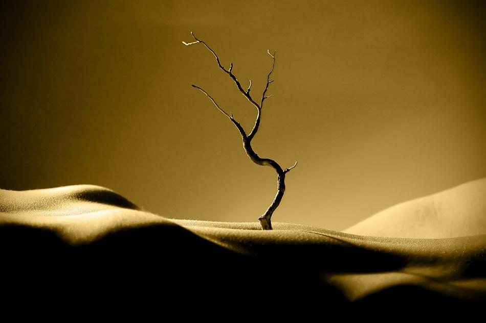 A piece of fine art art photography titled Desert Beauty by Paul Stander