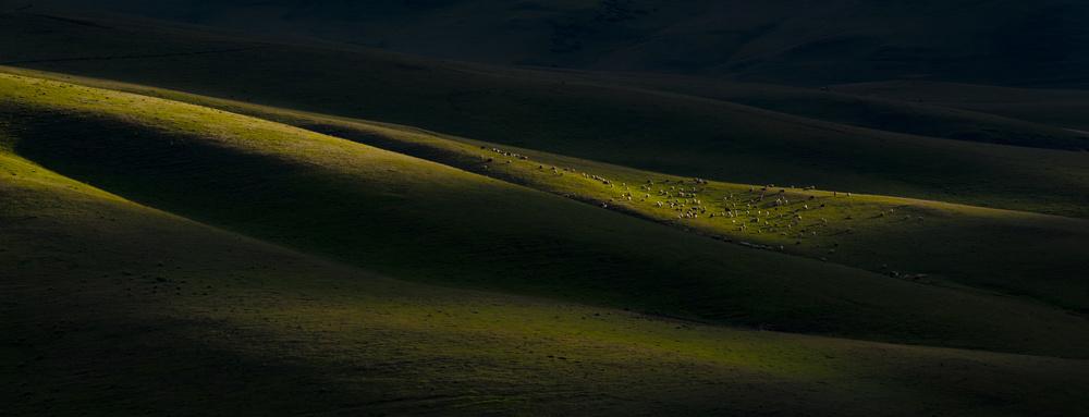 Light of the Highland