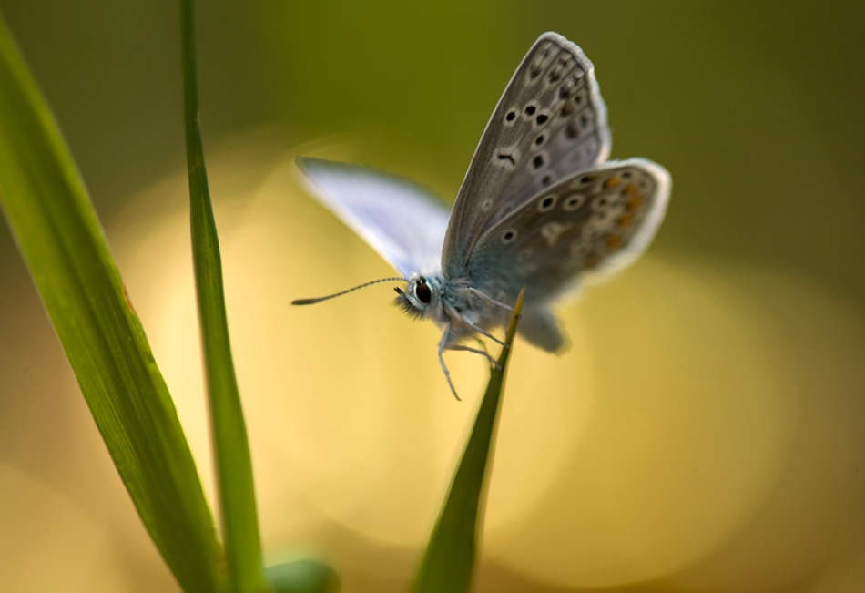 A piece of fine art art photography titled Butterfly by Bee Thalin