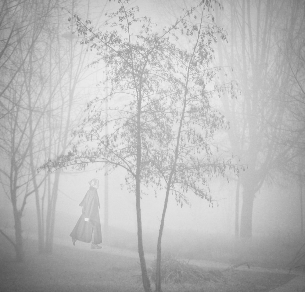 A piece of fine art art photography titled Into the Fog  by Anna Cseresnjes