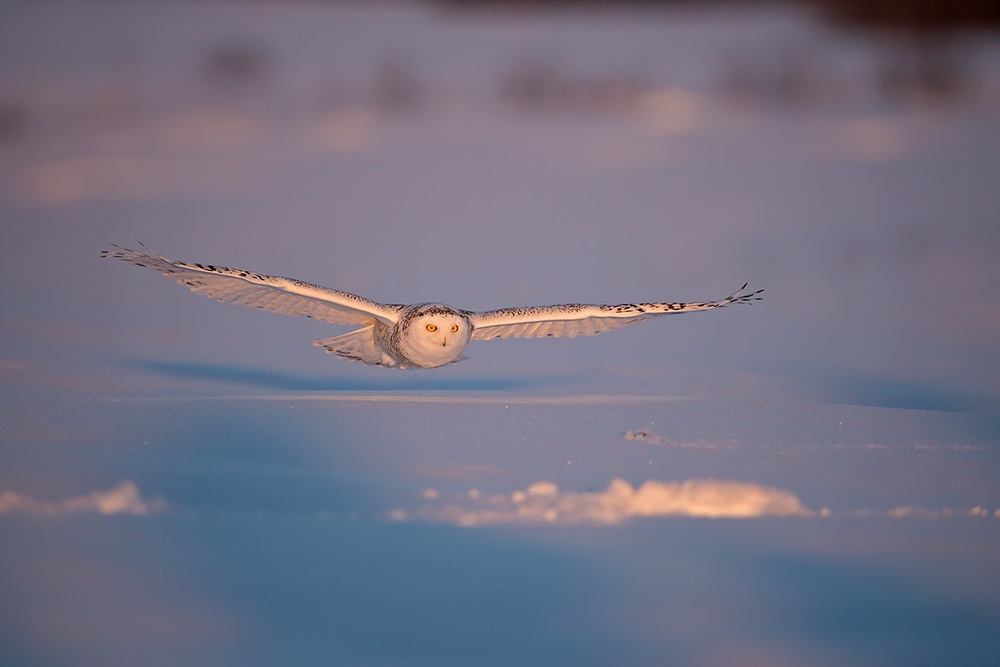 A piece of fine art art photography titled Flyby at Dusk by Marco Pozzi
