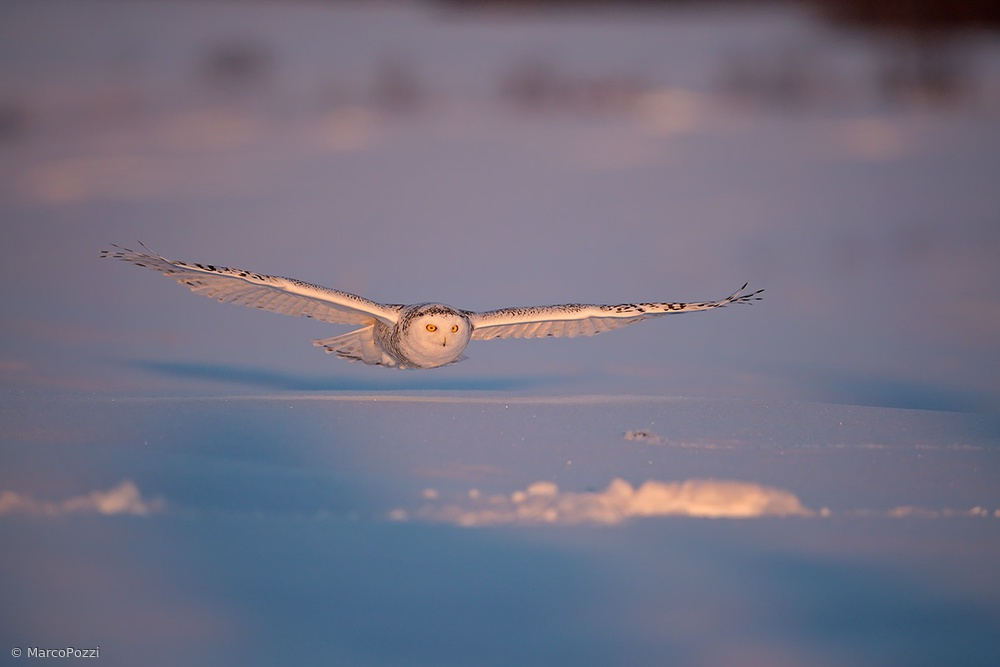 Flyby at dusk