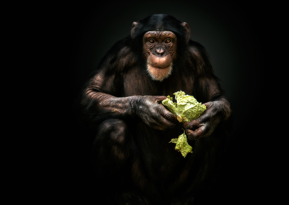A piece of fine art art photography titled Veggie by Pedro Jarque