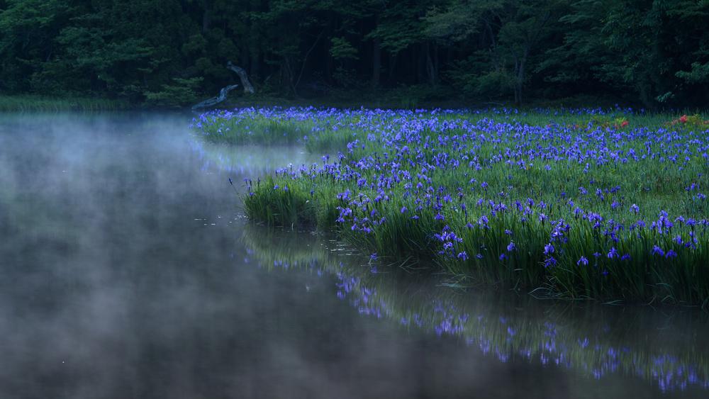 A piece of fine art art photography titled Purple Illusion by Comyu Matsuoka