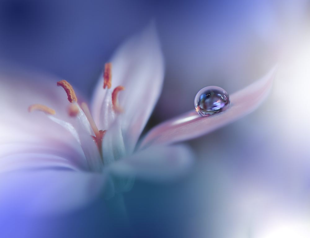 View this piece of fine art photography titled Endless Blue.. by Juliana Nan