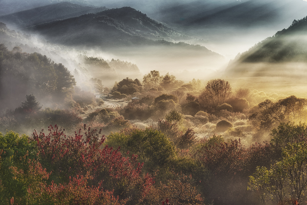 View this piece of fine art photography titled mysticall autumn morning (secret garden) by Michael Zheng