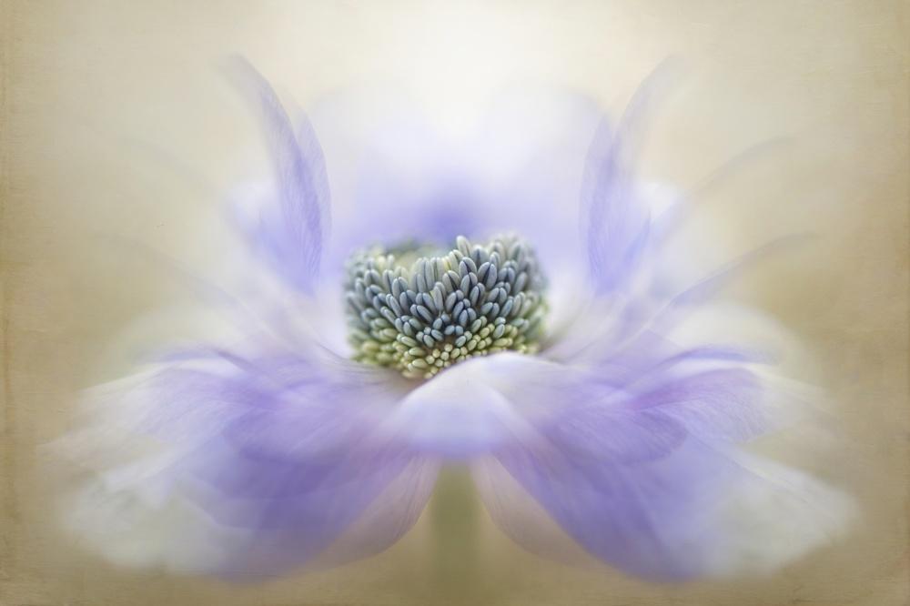 A piece of fine art art photography titled Breeze by Jacky Parker