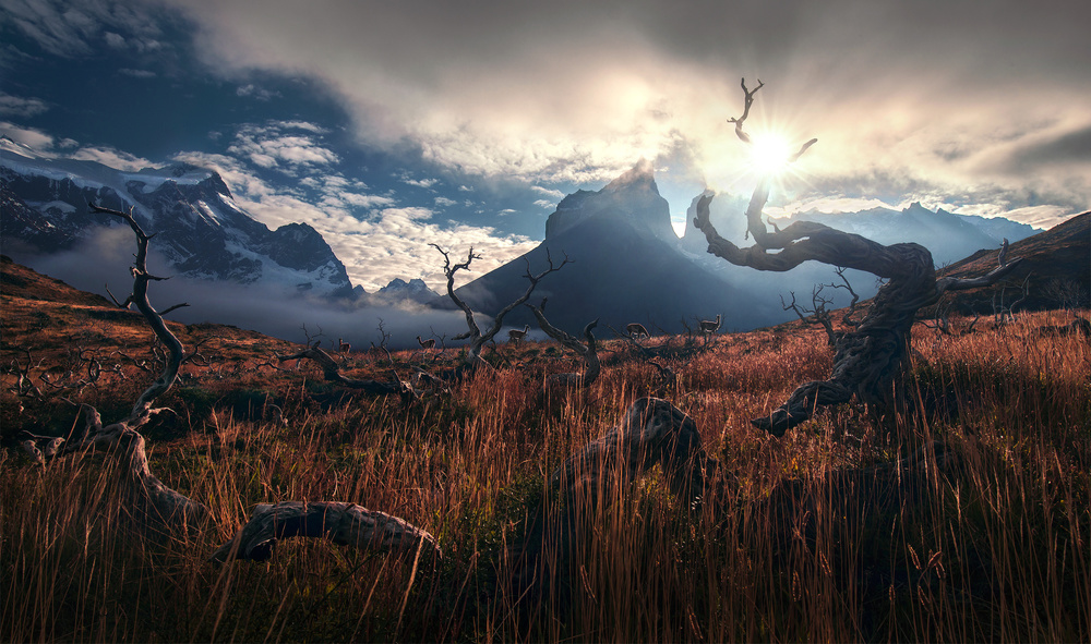 A piece of fine art art photography titled Between the Wild by Max Rive
