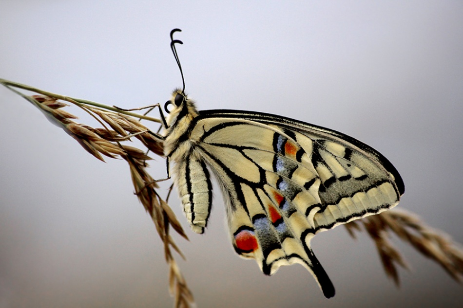A piece of fine art art photography titled The Rest of the Butterfly by Marie DAYNIE