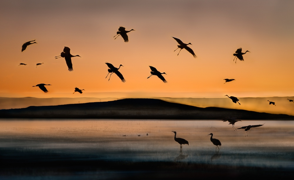 A piece of fine art art photography titled Fly-in at Sunset by Shenshen Dou