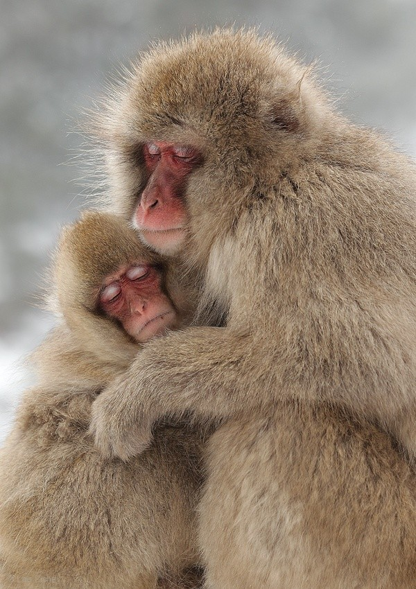 A MOTHER\\\'S LOVE