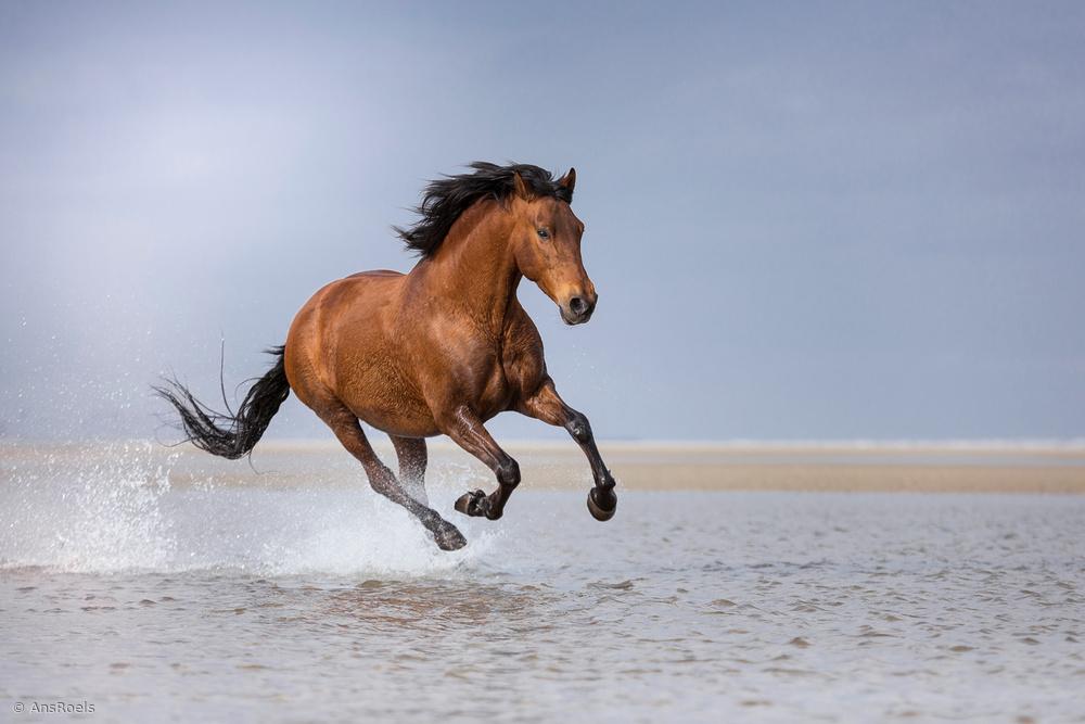 Seahorse...