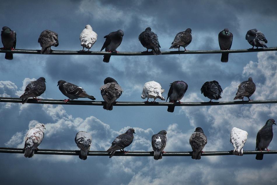 A piece of fine art art photography titled Musical by Shay Sapir