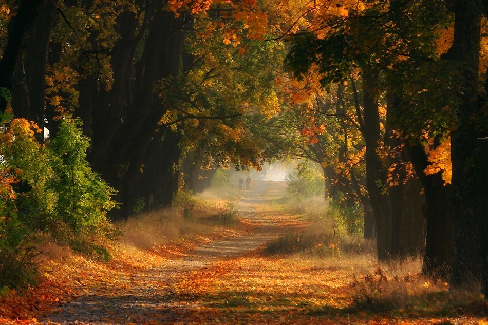 A piece of fine art art photography titled Autumn by fproject - Przemyslaw Kruk