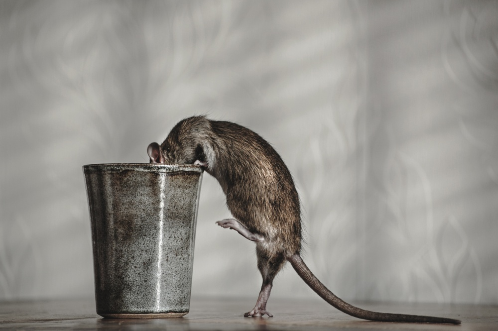 A piece of fine art art photography titled Ratatouille by Ilse Noordhof