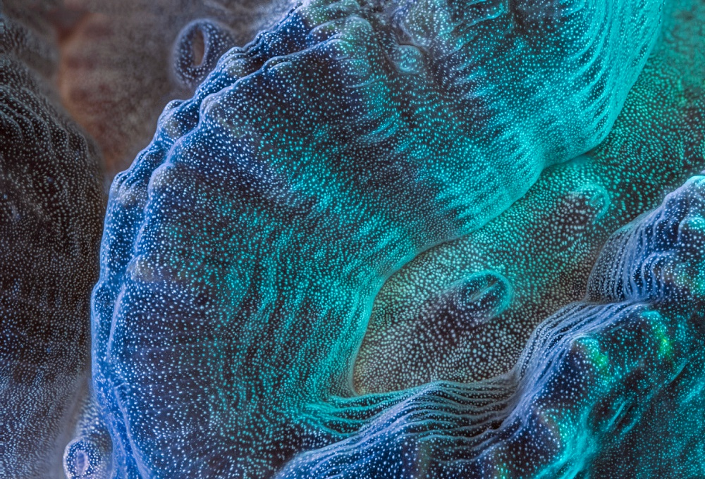 A piece of fine art art photography titled Maze Coral by Daniel Stoupin