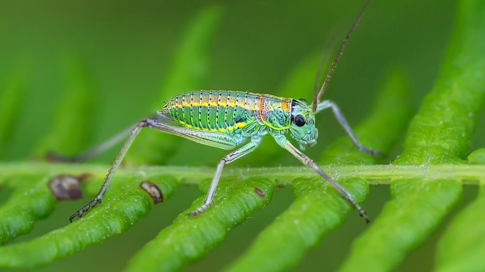 A piece of fine art art photography titled Grasshopper by Rui Ribeiro