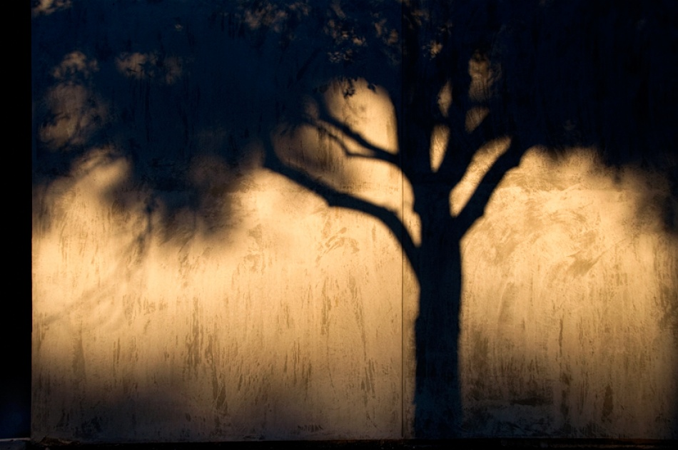 A piece of fine art art photography titled City Tree by Martin Gremm