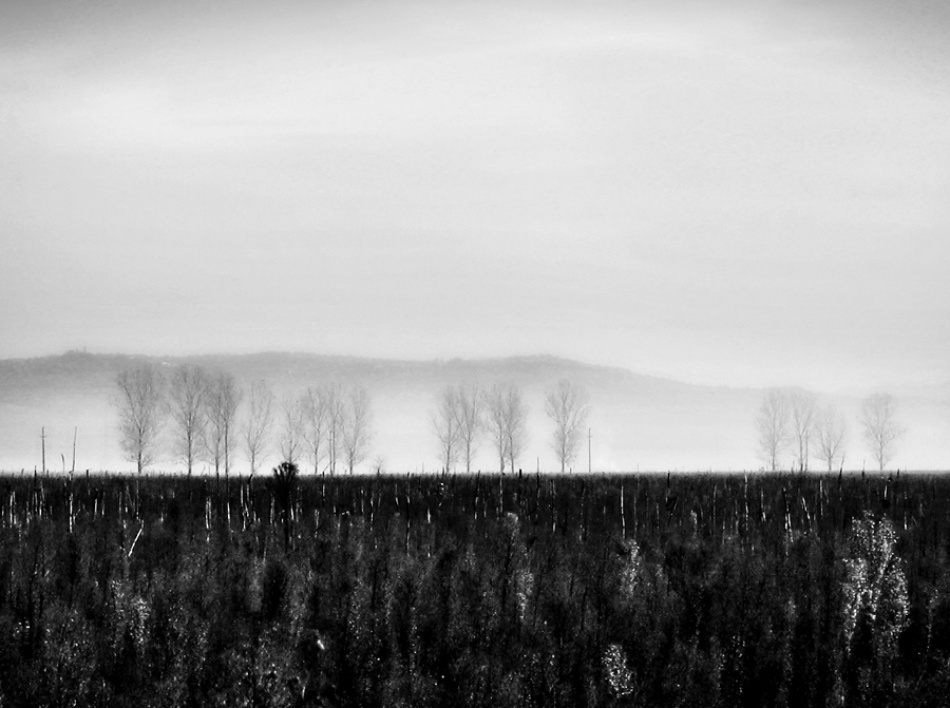 A piece of fine art art photography titled Morning by Andrei Baciu