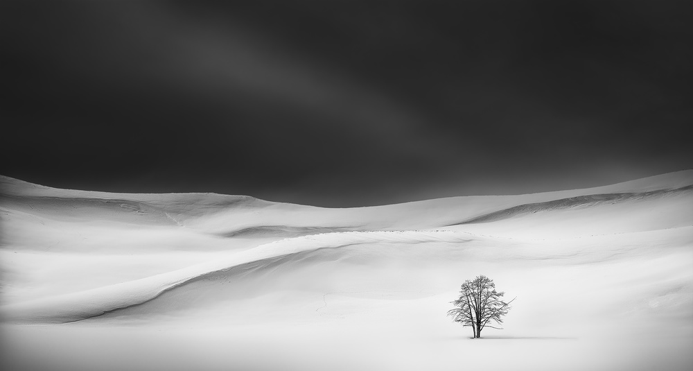 A piece of fine art art photography titled Solitude by Huibo Hou