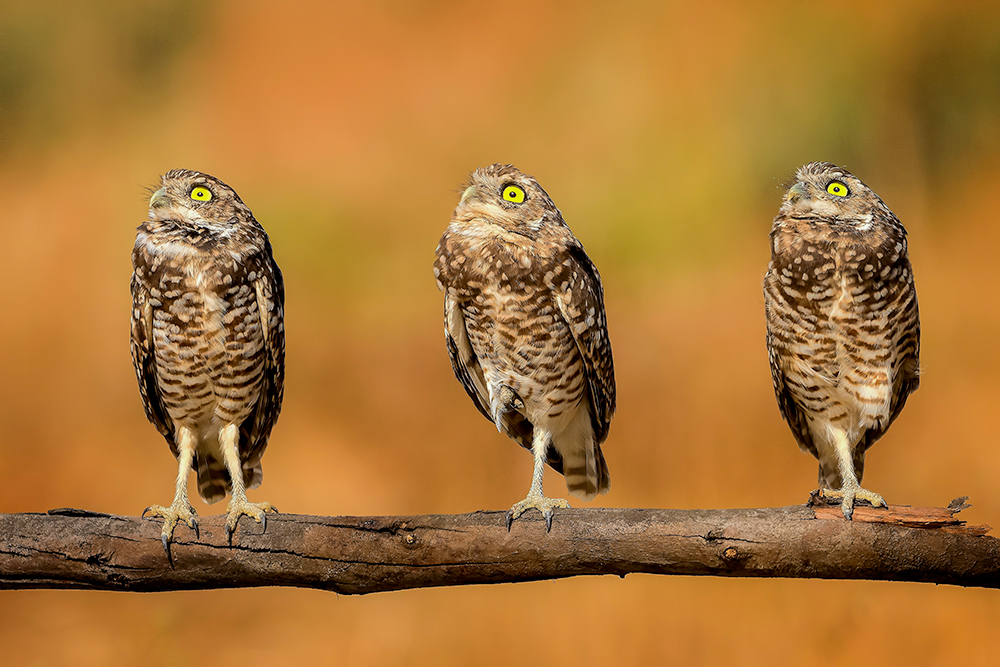 A piece of fine art art photography titled Synchronized Gazing! by Andrew J. Lee
