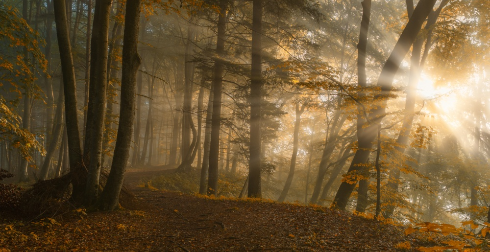 A piece of fine art art photography titled Forest Light by Norbert Maier