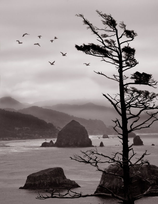 A piece of fine art art photography titled Ecola Point by David Scarbrough
