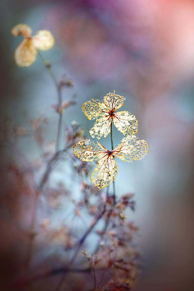 A piece of fine art art photography titled Simple Nature by Jacky Parker