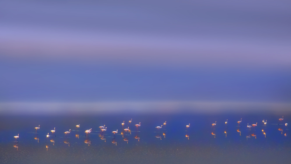 A piece of fine art art photography titled Early Morning by Phillip Chang