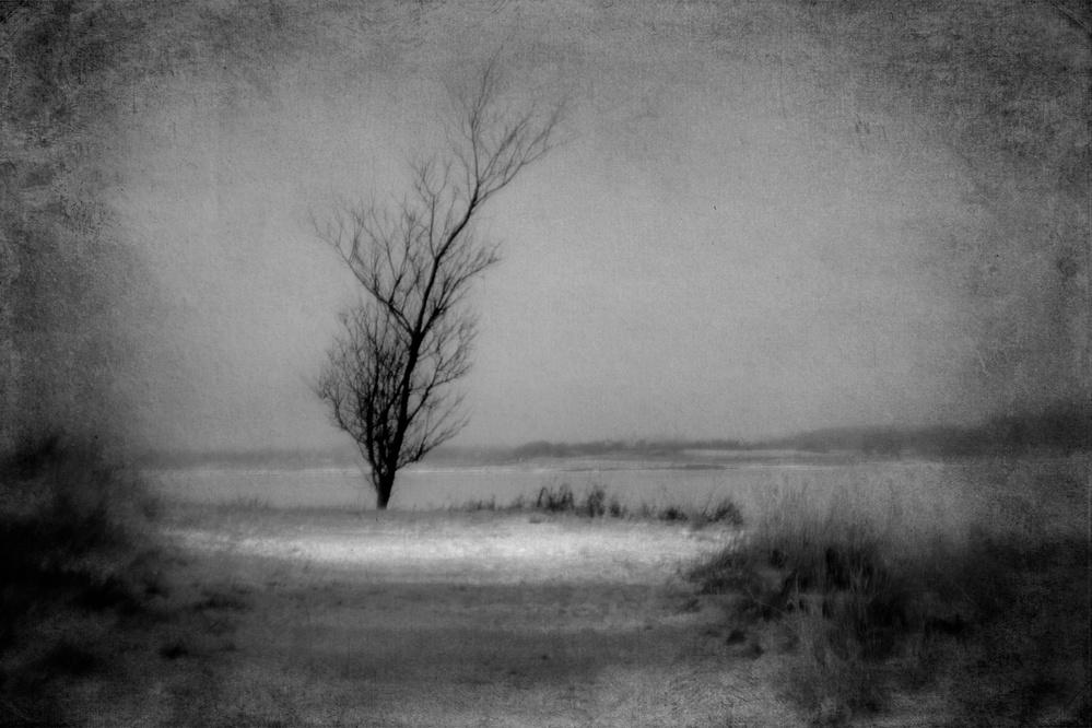 A piece of fine art art photography titled Winter Trees 04 by Jørgen Feldstedt
