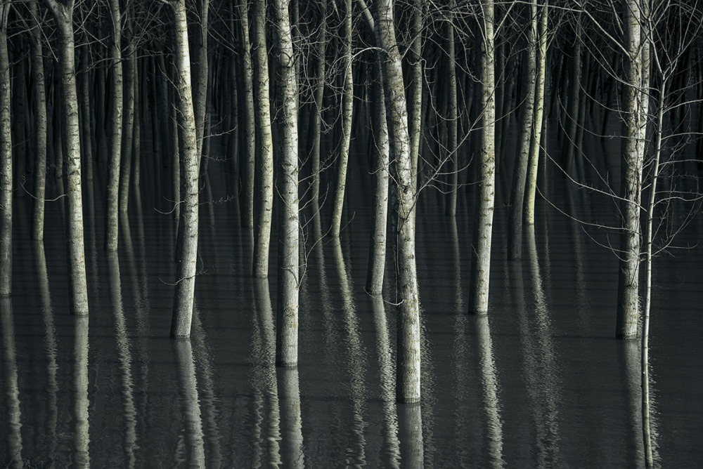 A piece of fine art art photography titled Mysterious Forest by LEONARDO BONIOTTO