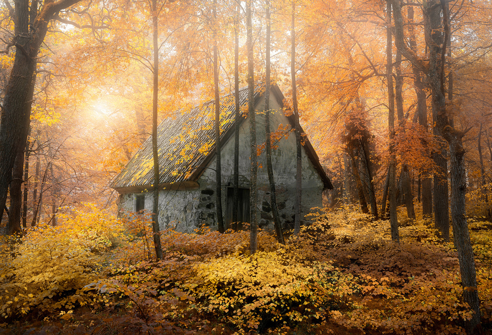 House in the forest during fallseason