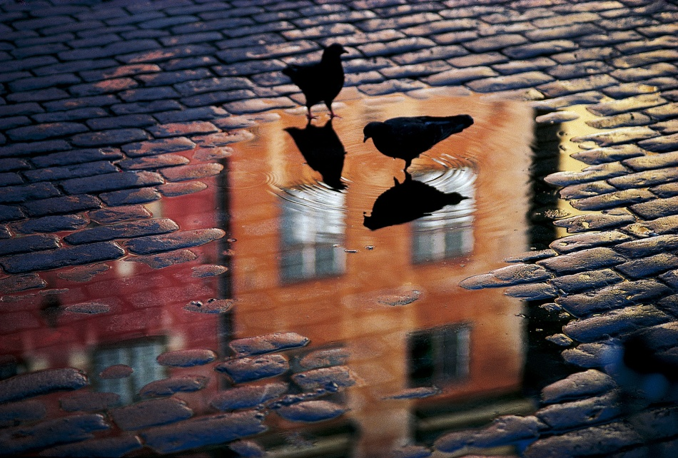 A piece of fine art art photography titled Pigeons by Allan Wallberg