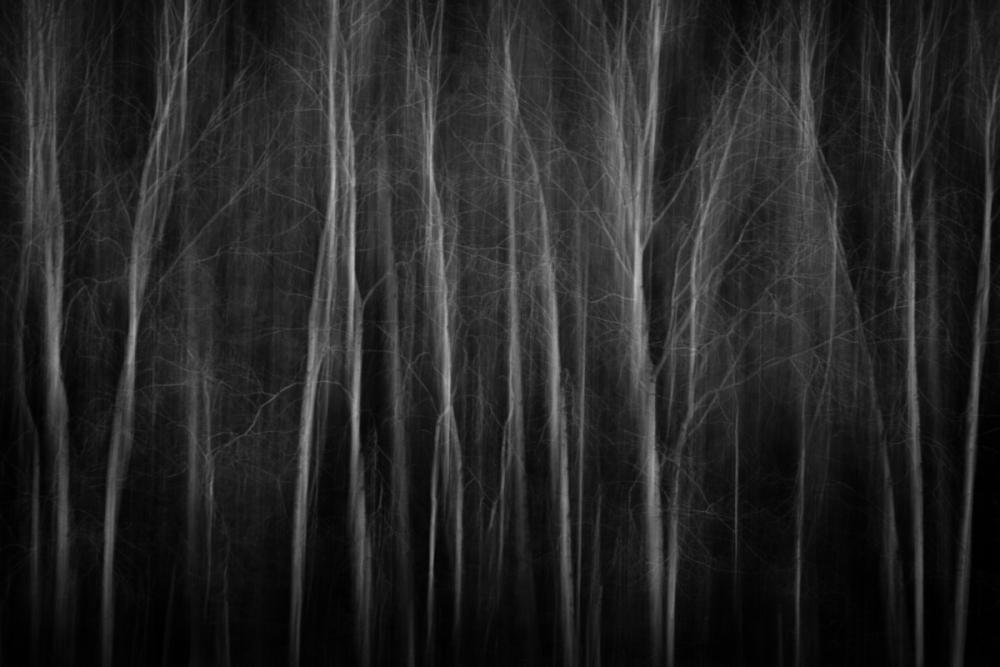 A piece of fine art art photography titled Trees Walking On Stilts by Anne Rose Pretorius