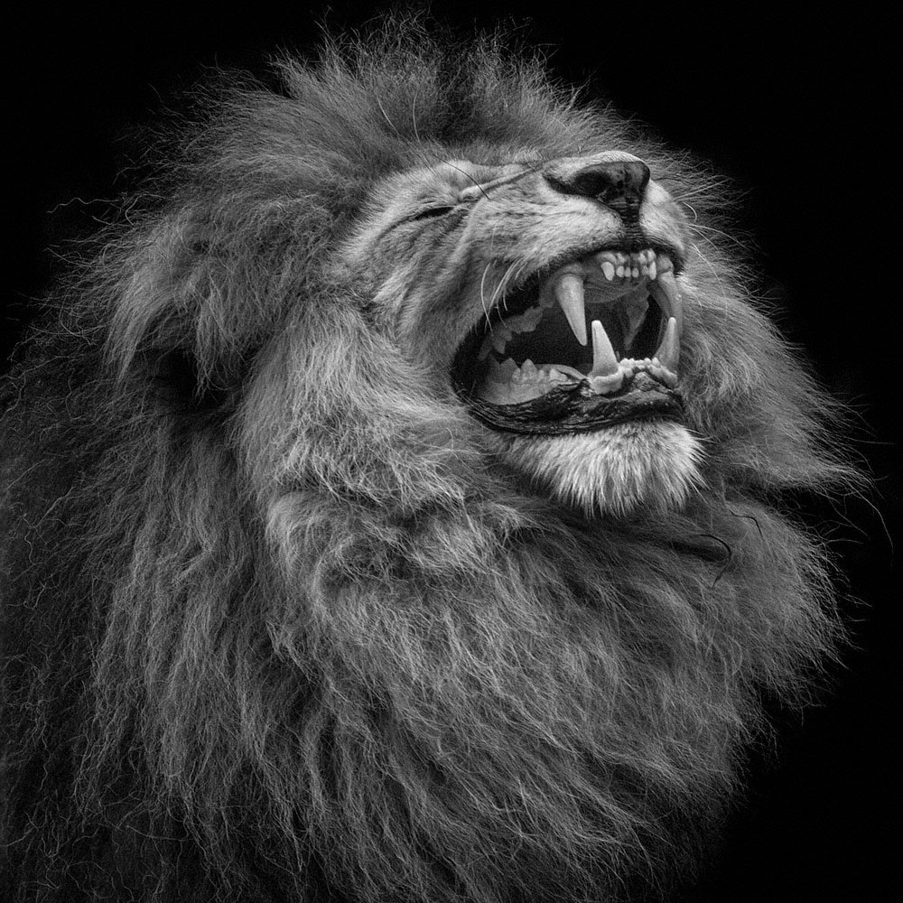 A piece of fine art art photography titled Roar by Wolf Ademeit