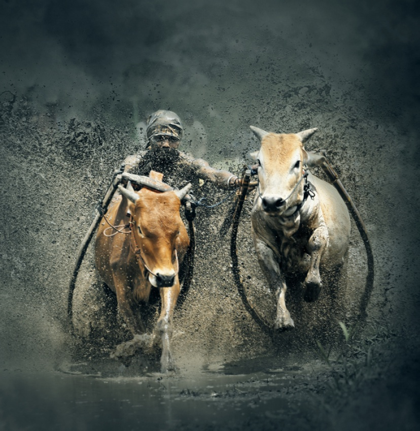 A piece of fine art art photography titled Cow Racing by Patiakers
