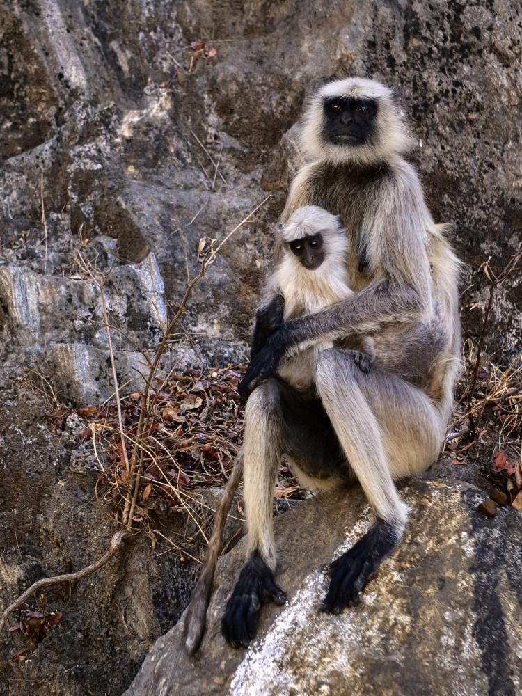 A piece of fine art art photography titled Monkey Motherhood by Basem Al-Qasim