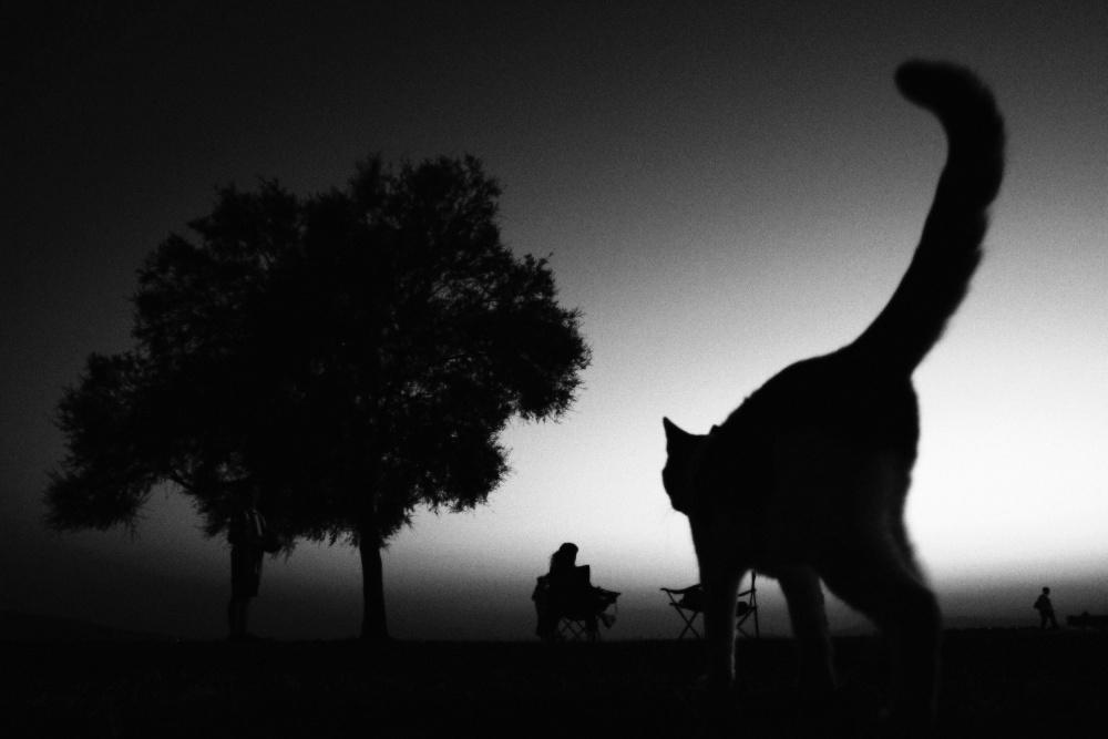 A piece of fine art art photography titled Sahildeki Kedi by Ali Ayer