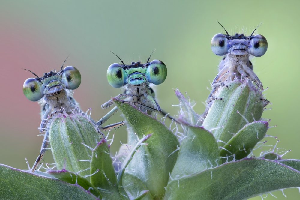 A piece of fine art art photography titled 6 Funny Little Eyes by Alberto Ghizzi Panizza