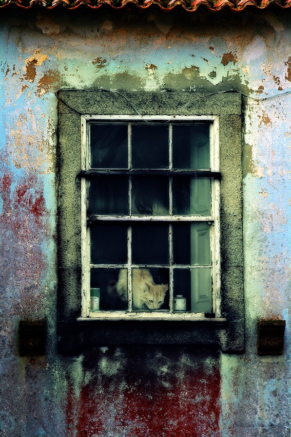 A piece of fine art art photography titled Decay by storytaylor